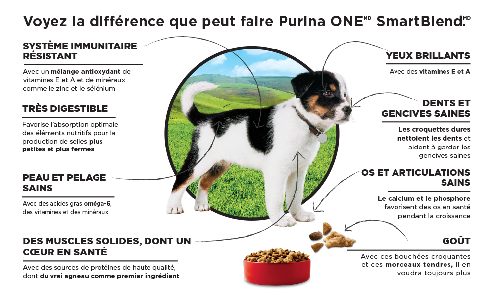 Purina ONE Puppy Infographic