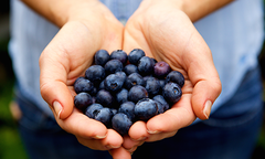 Pair of hands holding blueberries