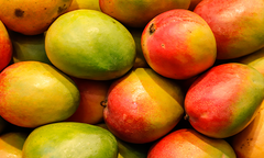 A bunch of mangoes