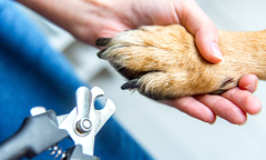 Dog's paw and nail clippers