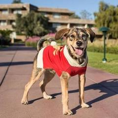 Dog in a red sweater