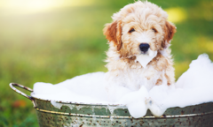 How to Bathe a Puppy Listing