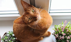 Orange cat sitting on window sill