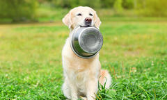 Golden retriever sitting on grass holding dog bowl in it's mouth