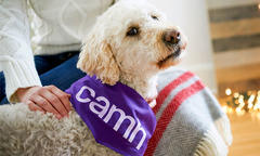 purina-camh-gifts of light-pet therapy