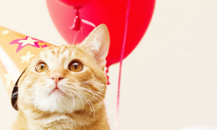 Celebrate Cats Birthday Listing