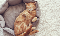 Purina Article - Six Ways to Make Your Cat Feel at Home