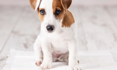 Prevent Puppy Accidents Listing