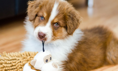 Puppy Proofing Your Home Listing
