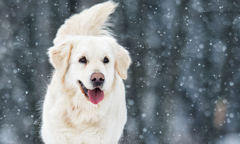 Dogs Warm in Winter Listing