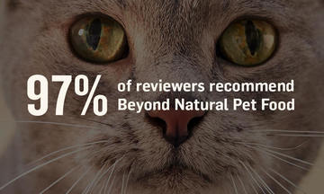 Beyond - Cat Reviews