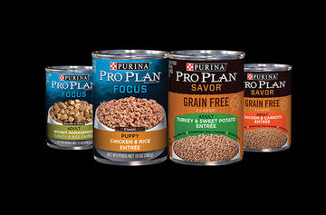 pro plan wet dog food
