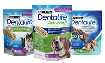 Dentalife Dog Review CTA
