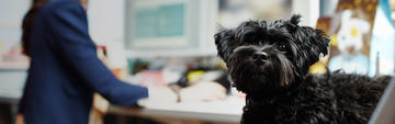 Small black dog sitting at a work desk