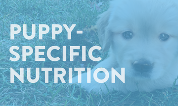 dog-chow-landing-puppy-specific-nutrition-module