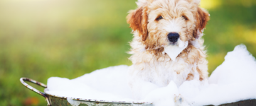 How to Bathe a Puppy Hero