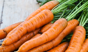 fresh bunch of carrots