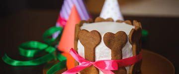 5 Ways to Celebrate Your Dog's Birthday Listing