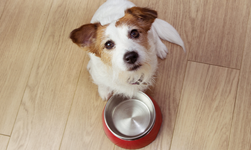 Dog sitting beside an empty food bowl
