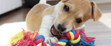 Puppy chewing on rope toy
