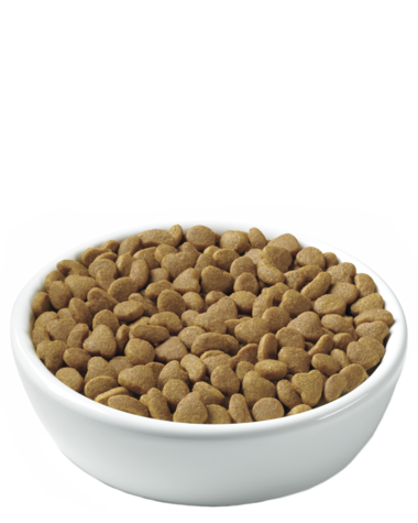 pro-plan-focus-urinary-tract-health-kibble